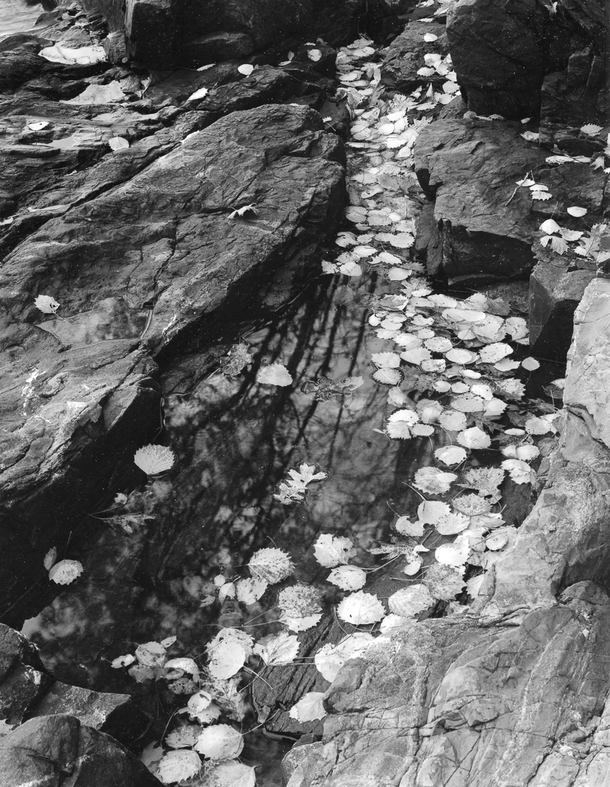 RainwaterPool_Coast_AcadiaNP_7-10