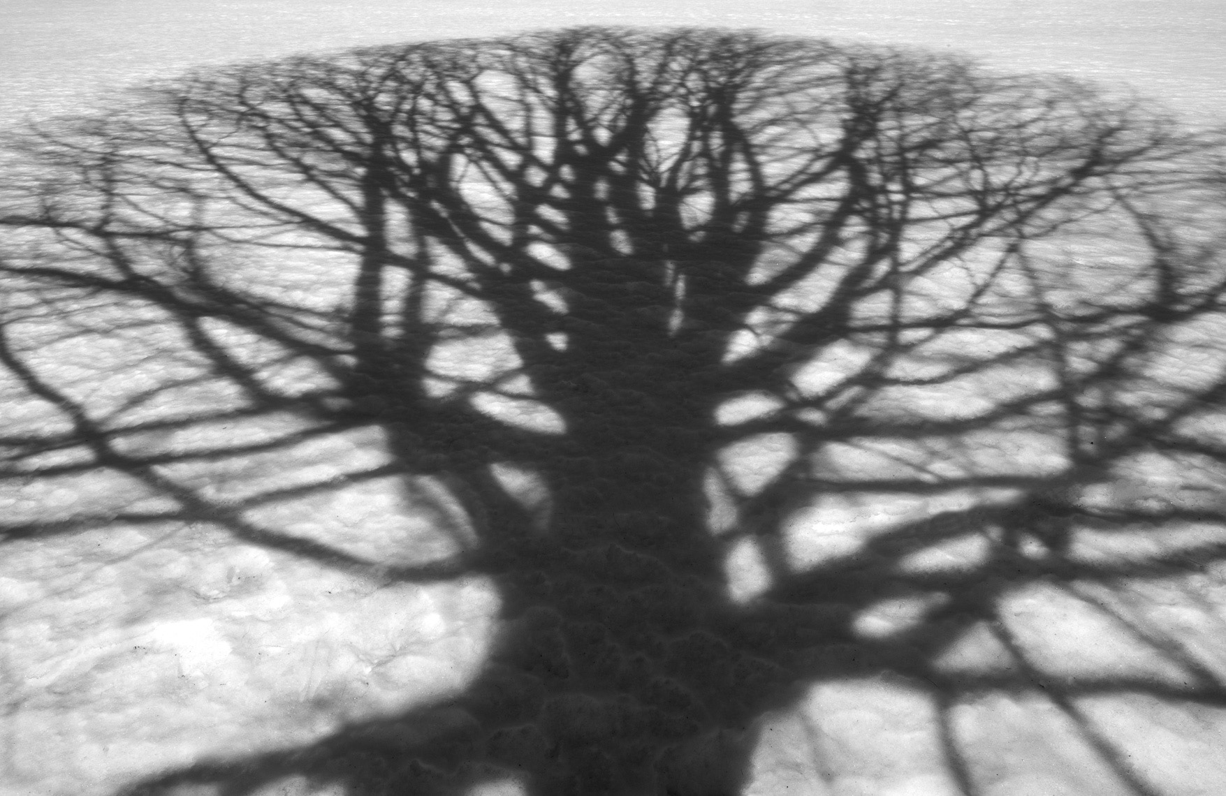 TreeShadow-3_Winter_Ipswich_3-2015